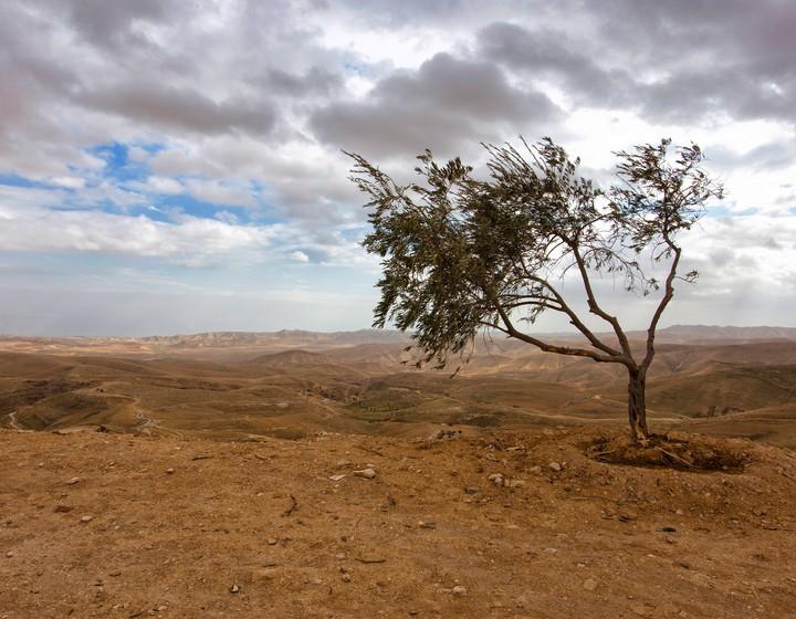 Paesaggi desolati