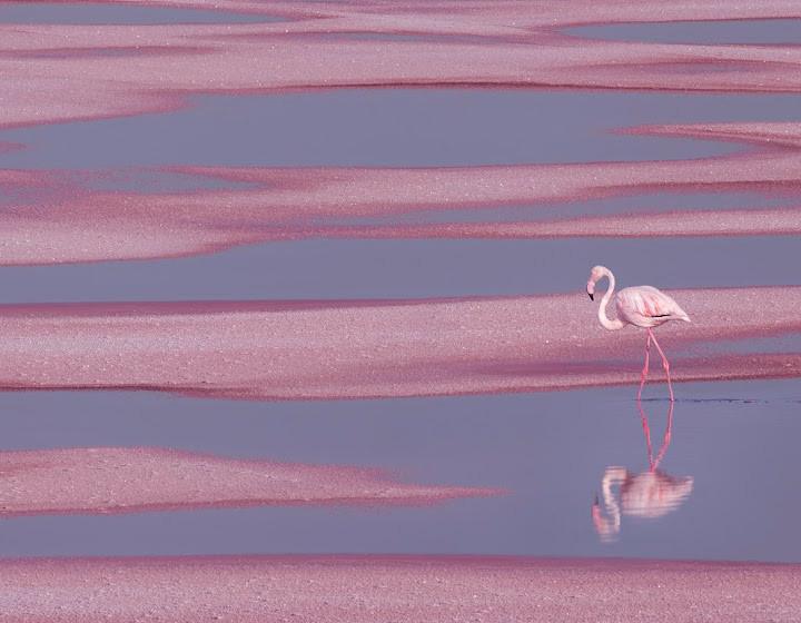Pink 2021